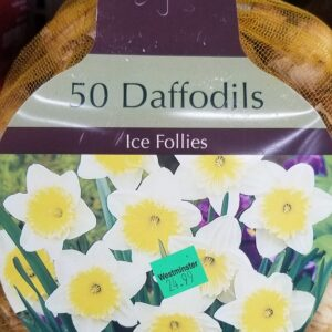Ice Follies Daffodils